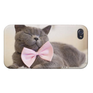 Gatito gris lindo iPhone 4 fundas