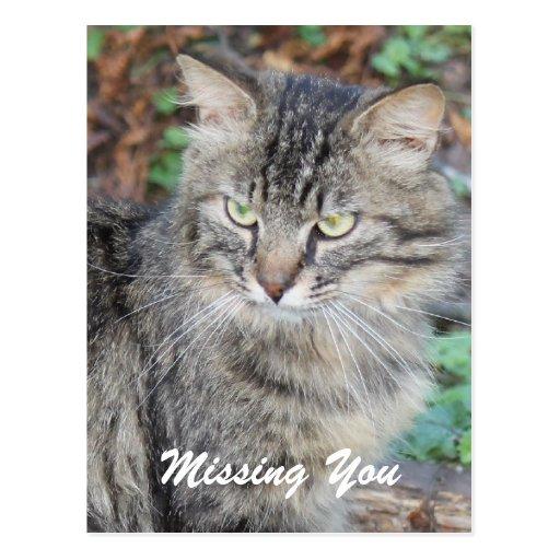 Gatito gris que le falta postal
