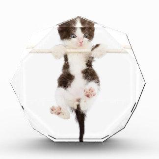 gatito. hora del recreo