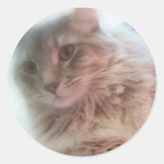 gatito ideal pegatina redonda