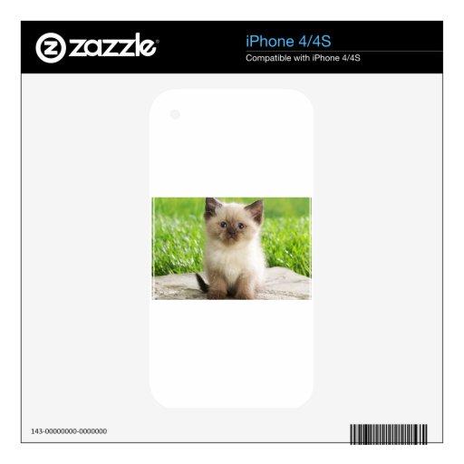 Gatito inocente de Ragdoll iPhone 4 Skins