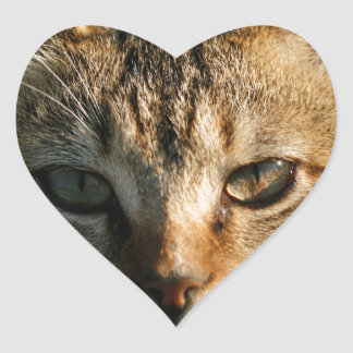 Gatito inquisitivo adorable del Tabby del bebé Pegatina En Forma De Corazón