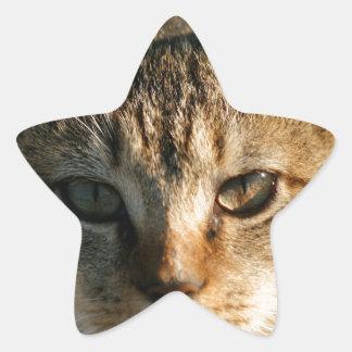 Gatito inquisitivo adorable del Tabby del bebé Pegatina En Forma De Estrella