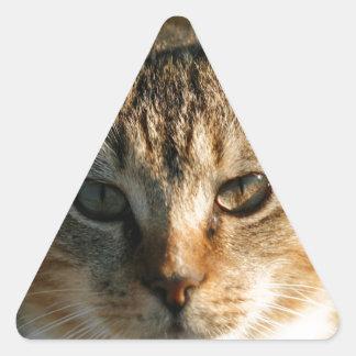 Gatito inquisitivo adorable del Tabby del bebé Pegatina Triangular
