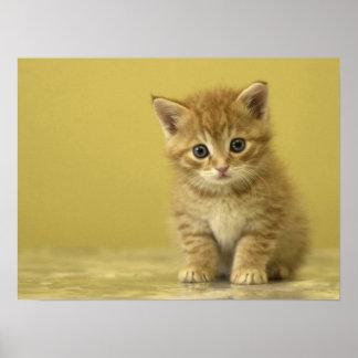 Gatito interesado póster