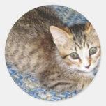 gatito juguetón pegatina redonda