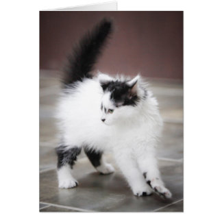 Gatito juguetón tarjeta de felicitación