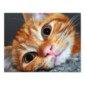 Gatito Kat Comunicados
