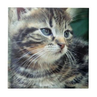 Gatito lindo adorable azulejo cuadrado pequeño