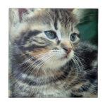 Gatito lindo adorable teja  ceramica