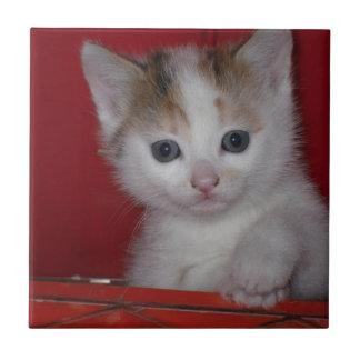 Gatito lindo azulejo cuadrado pequeño