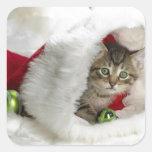 Gatito lindo calcomanía cuadradas personalizadas