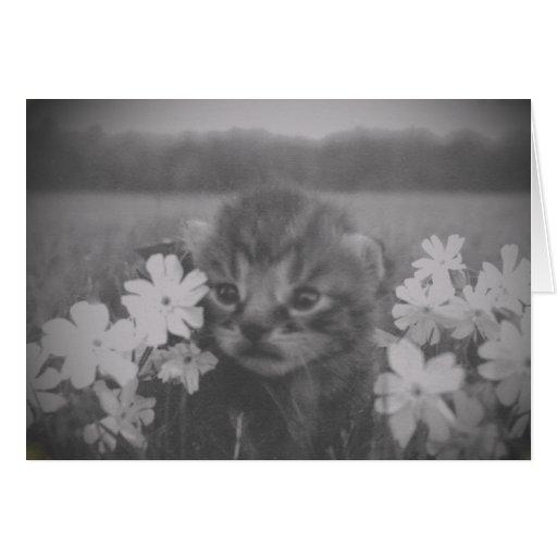 Gatito lindo con la tarjeta de las flores
