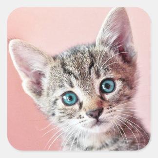 Gatito lindo con los ojos azules calcomanías cuadradas personalizadas