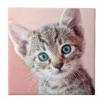 Gatito lindo con los ojos azules tejas  ceramicas