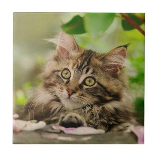 Gatito lindo del Coon de Maine Azulejo Cuadrado Pequeño
