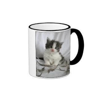 Gatito lindo del Coon de Maine con la taza de las