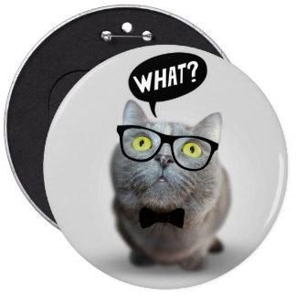 Gatito lindo del gato con los vidrios qué cita div