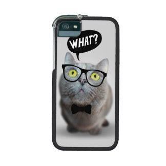 Gatito lindo del gato con los vidrios qué comi div