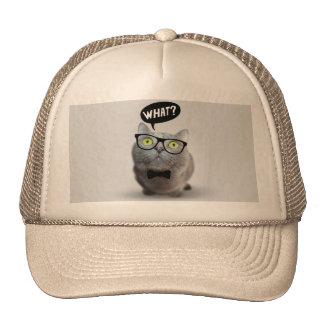 Gatito lindo del gato con los vidrios qué impresió