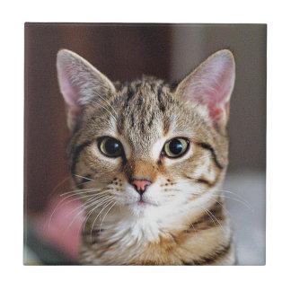 Gatito lindo del gato de Tabby Azulejo Cuadrado Pequeño