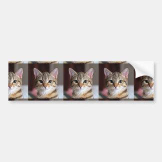 Gatito lindo del gato de Tabby Etiqueta De Parachoque