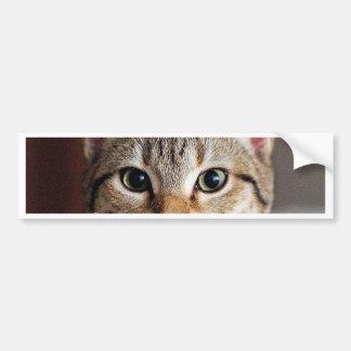 Gatito lindo del gato de Tabby Pegatina Para Auto