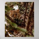Gatito lindo del lince en un poster del árbol