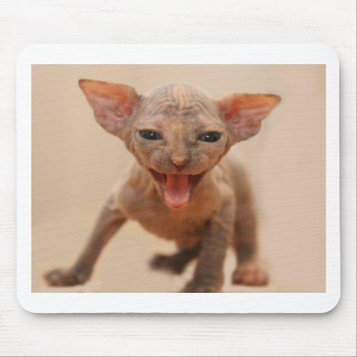 Gatito lindo del sphynx con la lengua hacia fuera alfombrilla de raton