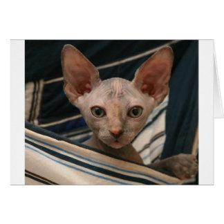 Gatito lindo del sphynx de los objetos curiosos tarjeta de felicitación