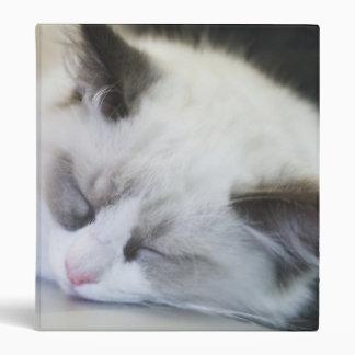 Gatito lindo dormido en un ordenador portátil