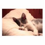 Gatito lindo el dormir esculturas fotográficas
