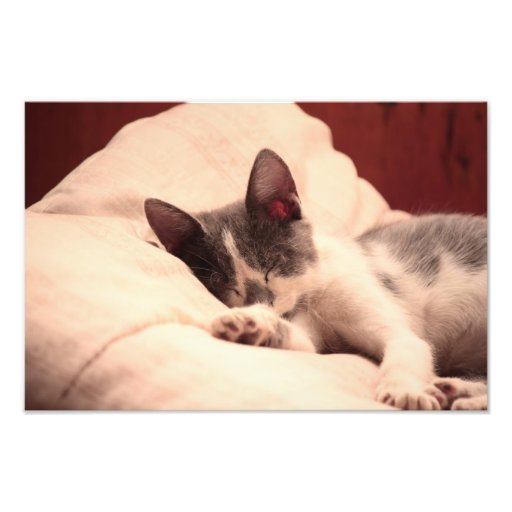 Gatito lindo el dormir foto