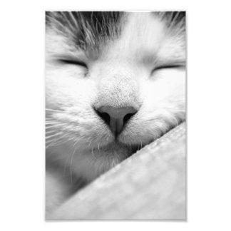 Gatito lindo el dormir fotografia