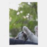 Gatito lindo el dormir toallas de cocina