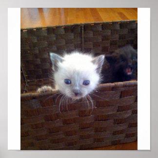 Gatito lindo en cesta póster