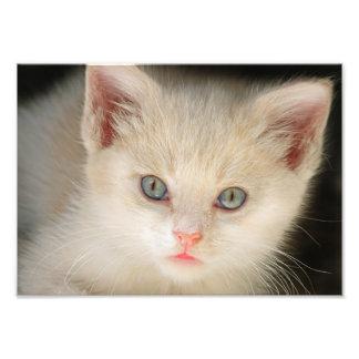 Gatito lindo fotografías