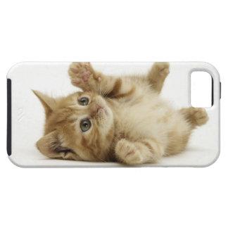 Gatito lindo funda para iPhone SE/5/5s
