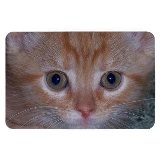 Gatito lindo imán rectangular