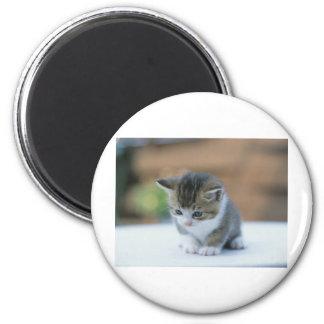 Gatito lindo imán redondo 5 cm