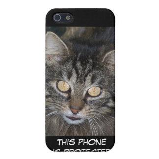 Gatito lindo iPhone 5 carcasa