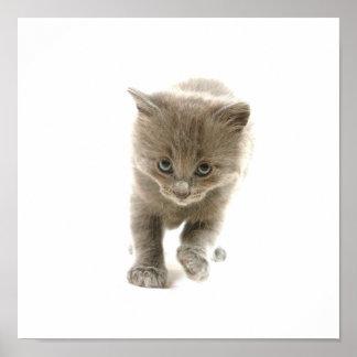 gatito lindo poster