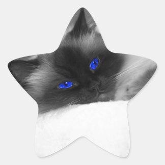 Gatito lindo calcomanía forma de estrella personalizadas