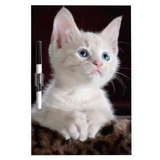 Gatito lindo pizarras blancas