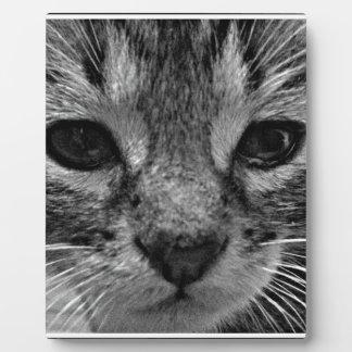 Gatito lindo placas de madera