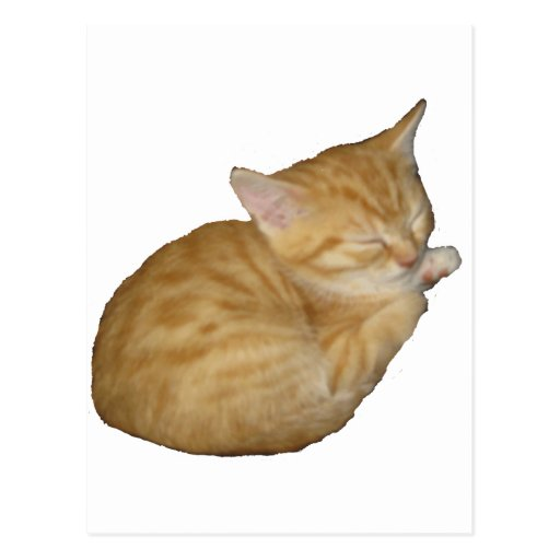 Gatito lindo postal
