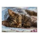 Gatito lindo que piensa en usted tarjeta de felici