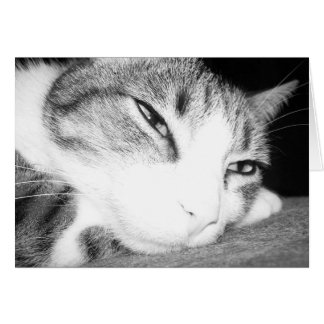 gatito lindo tarjeta pequeña