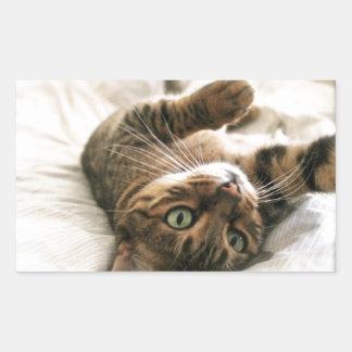 Gatito manchado Brown lindo del gato de Bengala Rectangular Pegatina