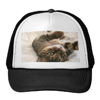Gatito manchado Brown lindo del gato de Bengala qu